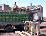 فیصل آباد: مزدور ٹرک پر لکڑیاں لوڈ کر رہے ہیں۔