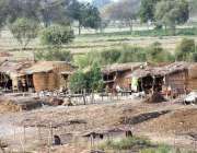 لاڑکانہ: دریائے انڈر کنارے خانہ بدوش عارضی خیمے بنا کر آباد ہیں۔