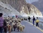 گلگت: نوجوان چرواہا اپنی بھیڑ بکریاں چرانے جا رہا ہے۔