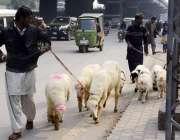 لاہور: محنت کش چھترے فروخت کے لیے جا رہے ہیں۔