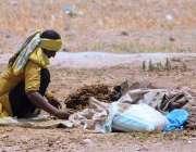 ملتان: کسان خاتون روایتی انداز سے گوبر کی پاتھیاں لگا رہی ہے۔
