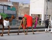 راولپنڈی: محنت کش اپنی اونٹنی کے ہمرا دودھ فروخت کے لیے جا رہا ہے۔