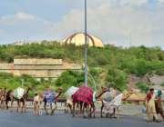 اسلام آباد: خانہ بدوش خاندان کے افراد اونٹنیوں کا دودھ فروخت کے لیے ..