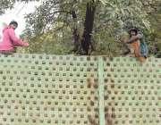 لاہور: مال روڈ پر پی ایچ اے کے ملازمین پودے لگانے کے لیے بنائی گئی خصوصی ..