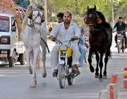 راولپنڈی: موٹر سائیکل سوار ایک ڈھولچی اپنے گھوڑوں کے ہمراہ کچہری روڈ ..