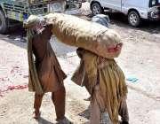 اسلام آباد: مزدور سبزی منڈی میں پیاز بھری بوری اٹھانے کے لیے ایک دوسری ..