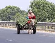 ملتان: خاتون گدھا ریڑھی پر سوار اپنی منز ل کی جانب گامزن ہے۔