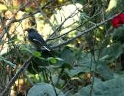 اسلام آباد: وفاقی دارالحکومت میں درخت کی شاخ پر بیٹھا پرندہ خوبصورت ..