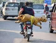 لاہور:ایک موٹر سائیکل سوار شخص شیر کاماڈل رکھے جارہا ہے۔