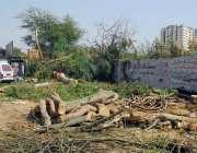 کراچی: کلین اینڈ گریم پاکستان مہم کے دوران سٹیڈیم روڈ سے درخت کاٹے جا ..