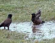راولپنڈی: مقامی پارک میں پرندے گرمی کی شدت کم کرنے کے لیے پانی سے لطف ..