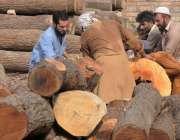 راولپنڈی: ٹمبر مارکیٹ میں مزدور لکڑی گودام میں منتقل کررہے ہیں۔
