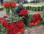 لاہور: ویلنٹائن ڈے کی آمد کے موقع پر پھول منڈی میں پھولوں کی خریداری ..