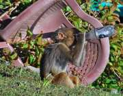 اسلام آباد: بندر گرمی او رپیاس کی شدت کم کرنے کے لیے پوتل کے منہ لگائے ..