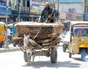 راولپنڈی: ایک محنت کش گدھا ریڑھے پر بھاری سامان لادے اقبال روڈ سے گزر ..
