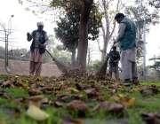 لاہور: پی ایچ اے اہلکار سڑک کنارے گرین بیلٹ کی صفائی ستھرائی میں مصروف ..