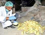لاڑکانہ: سندھ فوڈ کنٹرول اتھارٹی اہلکار نمک کی کوالٹی چیک کر رہا ہے۔