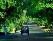 اسلام آباد: وفاقی دارالحکومت میں درختوس سے ڈھکی ہوئی سڑک کا خوبصورت ..