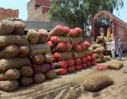 ملتان: مزدور سبزی منڈی میں ٹرک سے پیاز اتار رہے ہیں۔