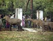 اسلام آباد: چڑیا گھر کی سیر و تفریح کے لیے آئے شہری جانوروں کا چارا کھلا ..