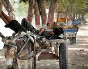 ملتان: مزدور کام نہ ہونے کے باعث دوپہر کے وقت آرام کر رہا ہے۔