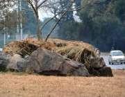 اسلام آباد: وفاقی دارالحکومت میں سڑک کنارے لگے پودوں کو خشک جھاڑیوں ..