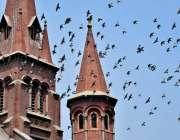لاہور: کبوتروں کا جھنڈ پرواز کررہا ہے۔