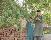 لاہور: بچے درخت سے جامن توڑ رہے ہیں۔