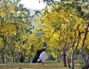 اسلام آباد: وفاقی دارالحکومت میں سڑک کنارے درختوں پر کھلے موسمی پھول ..