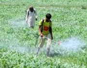 فیصل آباد: کسان فصلوں پر حفاظتی سپرے کر رہے ہیں۔