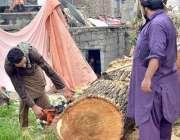 اسلام آباد: وفاقی دارالحکومت میں مزدور راستہ کلیئر کرنے کے لیے درخت ..