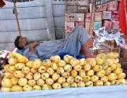 اسلام آبا د: دکاندار آم سجائے گاہکوں کا منتظر ہے۔