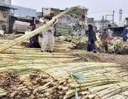 اسلام آباد: دکاندار گاہکوں کو متوجہ کرنے کے لیے گنے سجا رہا ہے۔