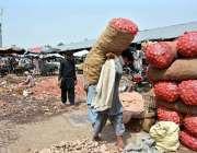 فیصل آباد: مزدور سبزی منڈی میں پیاز کی بوریاں ٹرک سے اتار رہا ہے۔