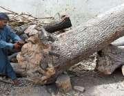 لاڑکانہ: مزدور لکڑی کاٹنے میں مصروف ہے۔