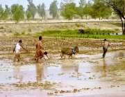 ملتان: کسان روایتی انداز سے کھیت کو فصل کے لیے تیار کر رہے ہیں۔