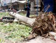 حیدرآباد: تیز آندھی کے باعث گرنے والے درخت سڑک پر پڑے ہوئے ہیں۔