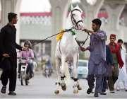 راولپنڈی: کوچوان شادی بیاہ اور دیگر تقریبات میں ڈانس کرنے والا کھوڑا ..