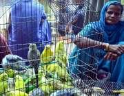 حیدر آباد: محنت کش خاتون گھر کی کفالت کے لیے فینسی برڈز فروخت کررہی ..