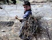 راولپنڈی: کچی بستی کارہائشی ایک بچہ جلانے کیلئے درختوں کی خشک ٹہنیاں ..