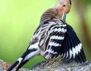 گلگت: جلال آباد کے عاقہ میں بیٹھا پرندہ خوبصورت منظر پیش کررہا ہے۔