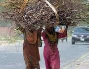 ملتان: خانہ بدوش خواتین گھر کا چولہا جلانے کے لیے خشک لکڑیاں اٹھا جار ..