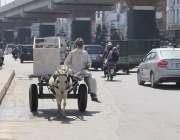 لاہور: ایک محنت کش گدھا ریڑھی پر سامان رکھے جار ہا ہے۔