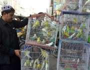 کوئٹہ: دکاندار فینسی برڈ فروخت کے لیے گاہکوں کا منتظر ہے۔