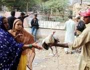حیدرآباد: خاتون ہفتہ وار جمعہ بازار سے مرغیاں خرید رہی ہے۔