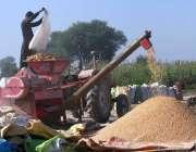 ملتان: لاڑ روڈ پر اپنے کھیت میں کسان مکئی کی فصل کاٹتے ہوئے