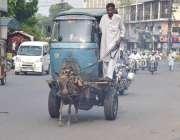 لاہور: ایک شخص گدھا ریڑھی پر رکشے کی باڈی رکھ کر ورکشاپ لیجا رہا ہے۔