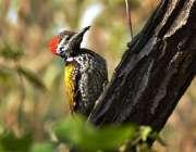 اسلام آباد: درخت پر بیٹھا پرندہ خوبصورت منظر پیش کر رہا ہے۔