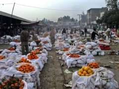 FAISALABAD: Vendors busy in selecting and purchasing oranges from a fruit market.