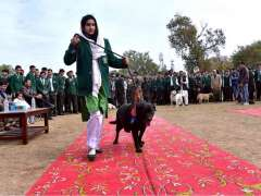 PESHAWAR: A participant with her dog walking on ramp during the 2nd Grand Pet Show 2019 at Edwards College.